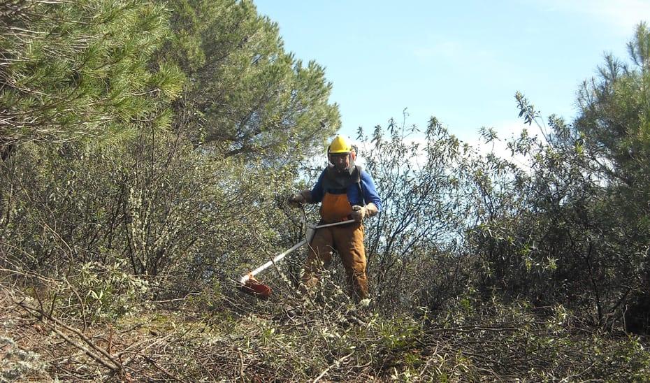 Más de 14,5 millones en ayudas para la prevención de incendios forestales
