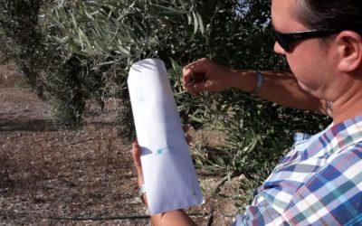 Comienza la campaña de recogida de hojas para análisis foliar