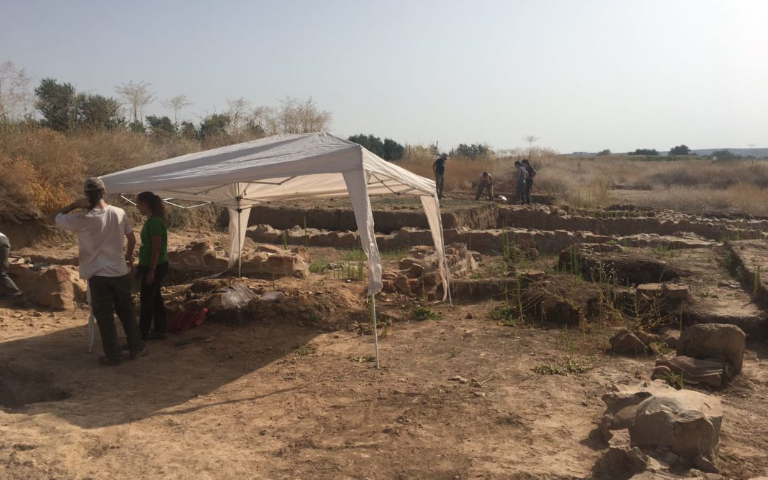 Huesos de aceitunas de más de 2000 años en el Yacimiento Arqueológico de Villanueva de la Reina