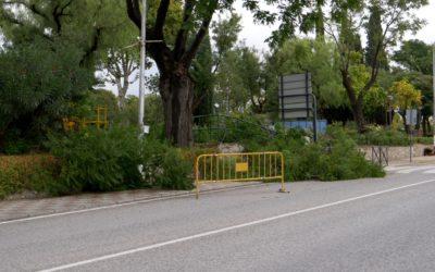 El Ayuntamiento se encuentra actuando en los árboles situados en el Parque Municipal