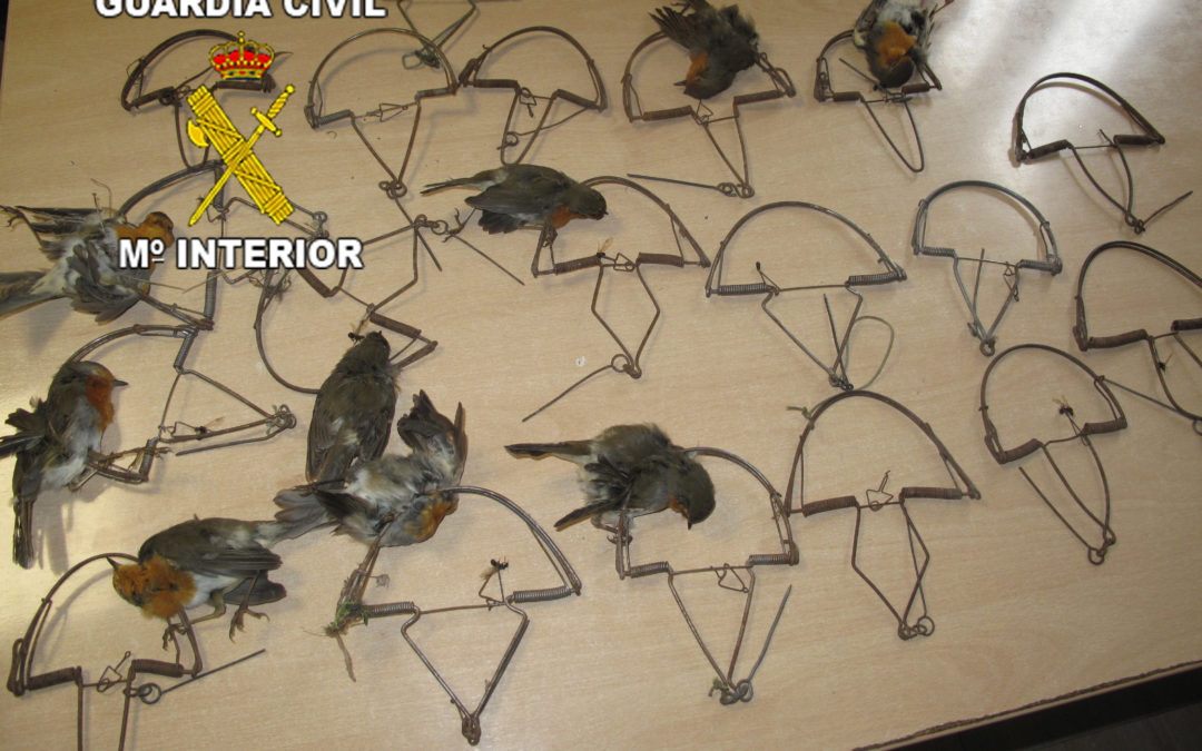 Investigan en Villanueva de la Reina al presunto autor de un delito a la Protección de la Flora y la Fauna