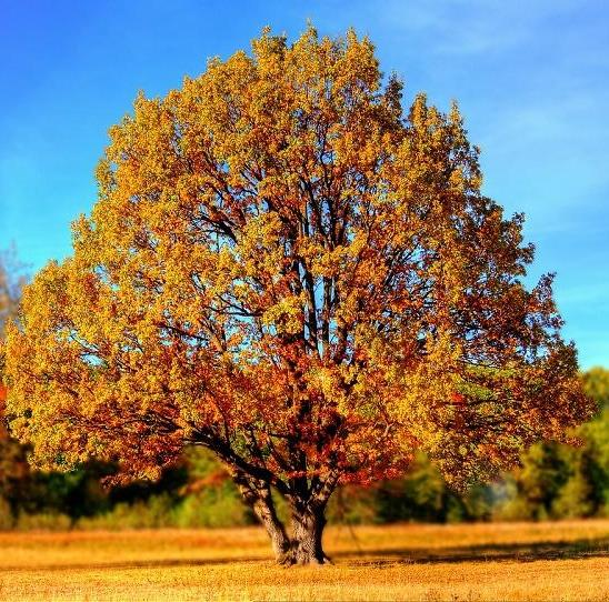 """""""El otoño en el aprendizaje escolar"""" por Paqui Cámara"""