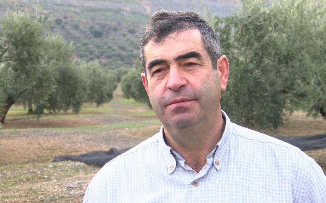 Miguel Serrano nos habla sobre el inicio de la campaña de la aceituna en Jamilena