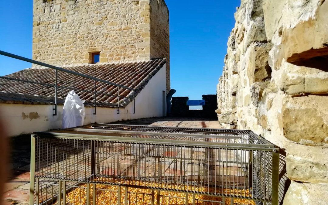 El Ayuntamiento de Lopera implanta un sistema de control de palomas