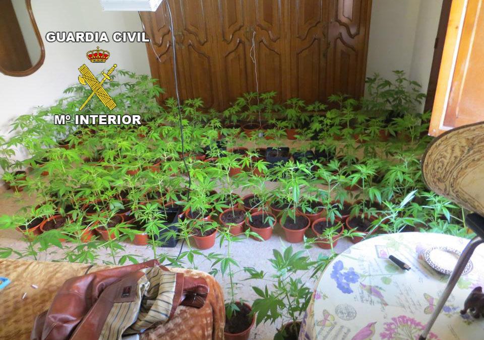 Dos detenidos por cultivo de cannabis en Alcaudete