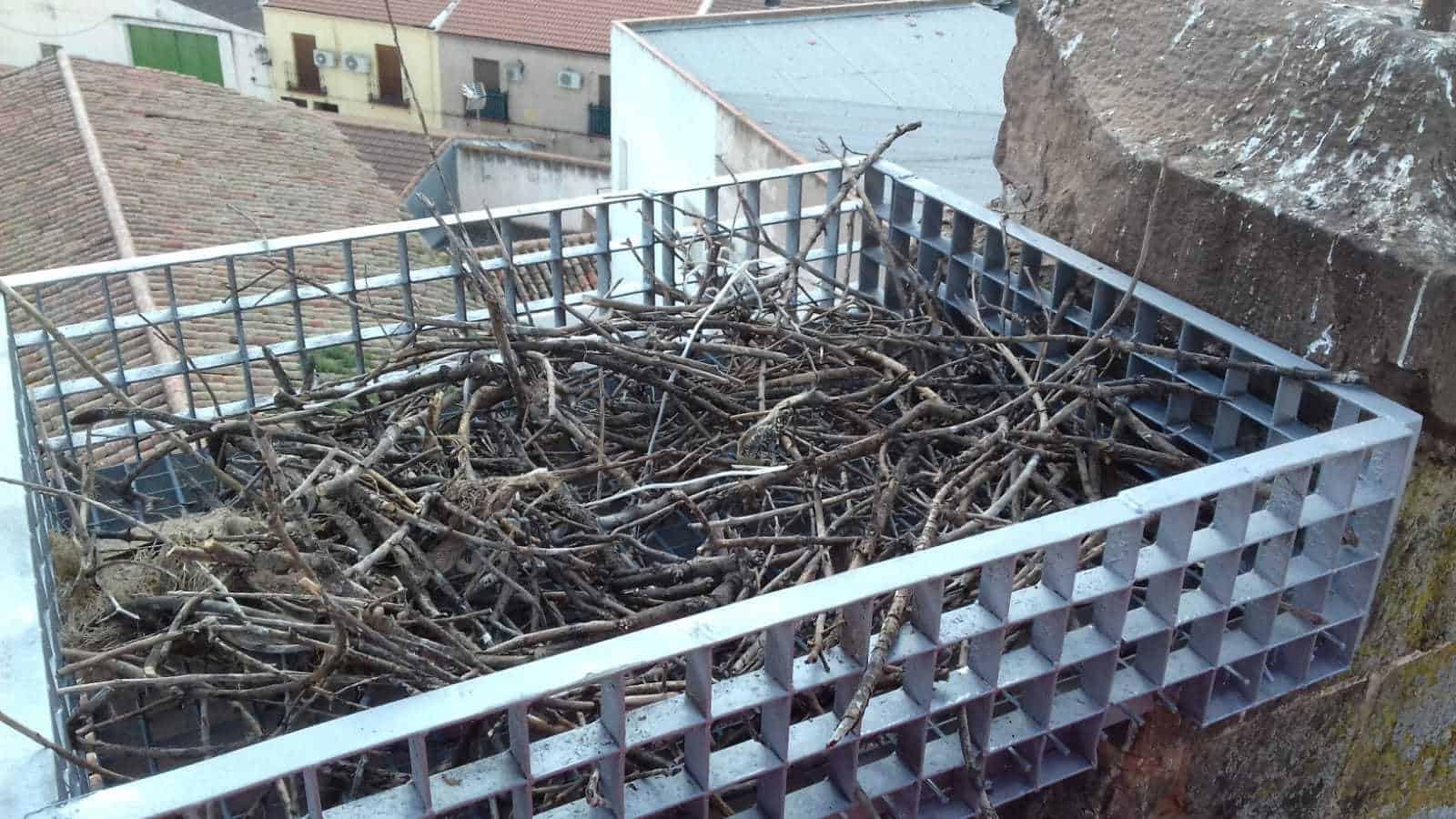 La Carolina7. nido cigüeñas navas de tolosa 1