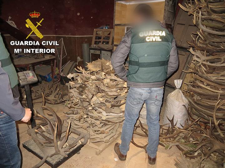Detenidos tres vecinos de La Carolina por comerciar con astas de ciervo y gamo