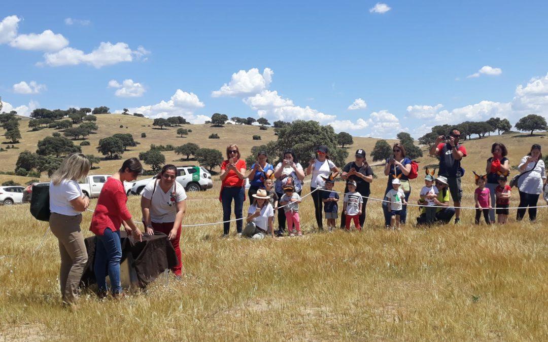 Escolares del colegio «Marqueses de Linares participan en la suelta de linces ibéricos