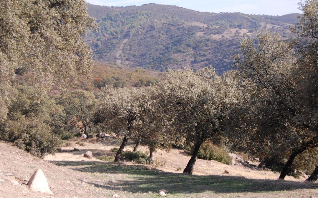 La Junta autoriza la caza de conejos en Lopera por la superpoblación