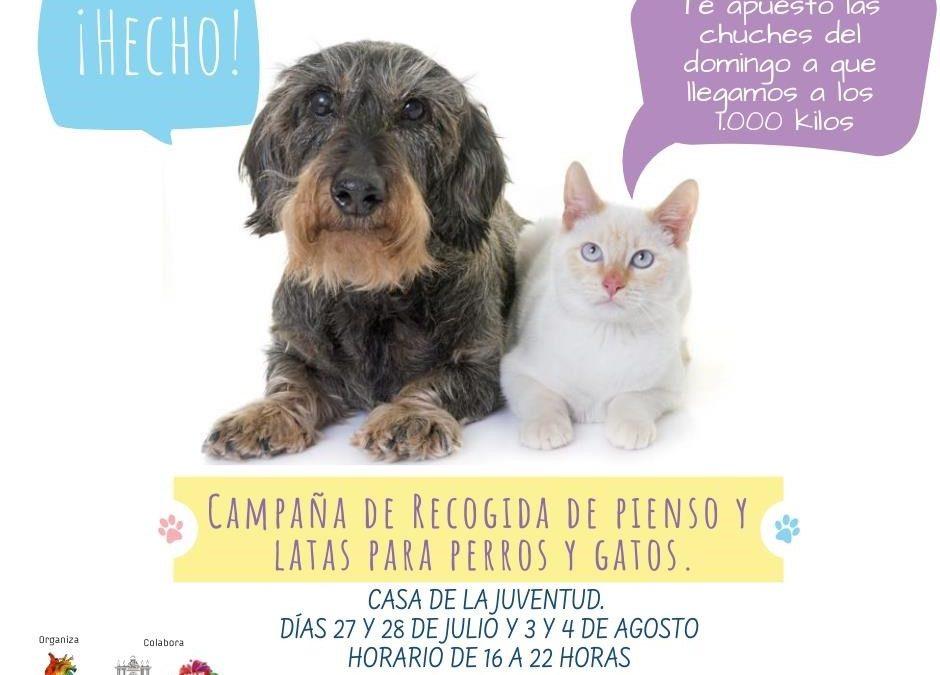 Recogida de comida para perros y gatos