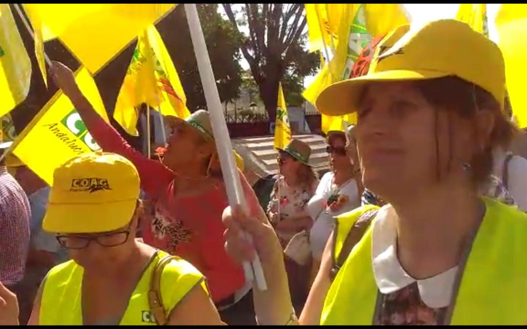 Más de 200 autobuses confirman su salida mañana desde Jaén hacia la gran manifestación en Madrid en defensa del olivar tradicional