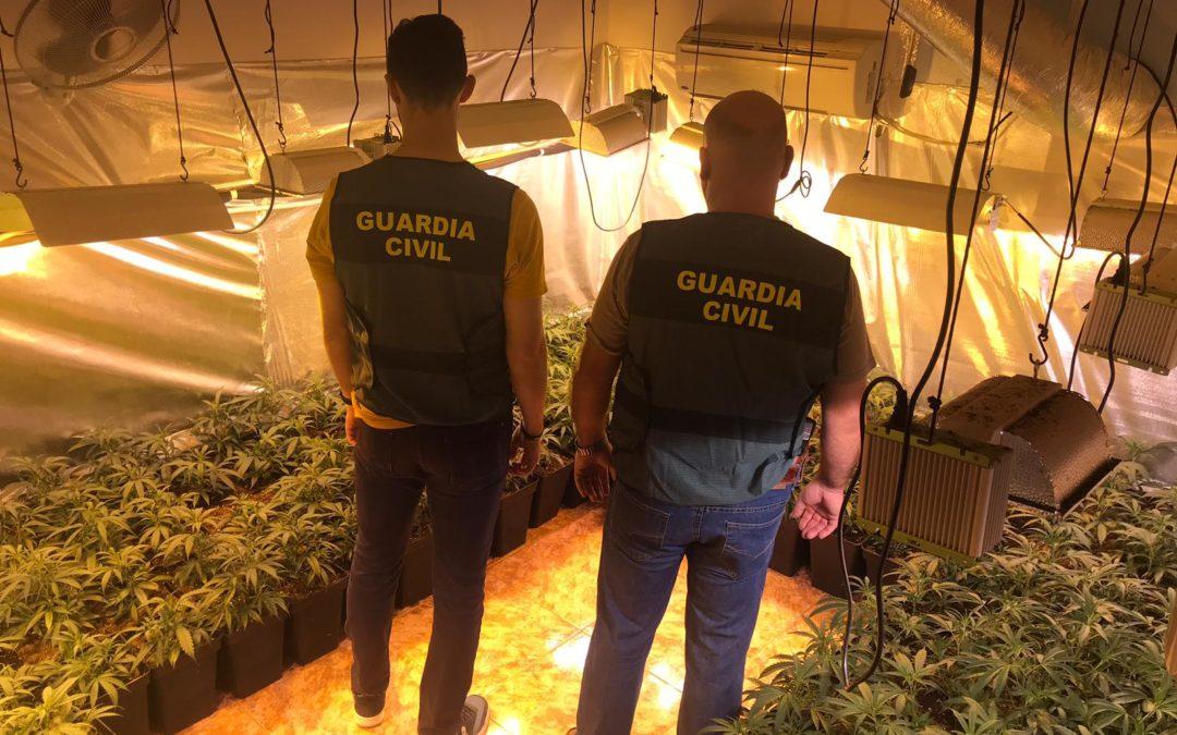 Ocho detenidos en Marmolejo por una macro plantación de marihuana