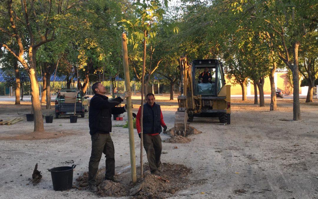 El Ayuntamiento repone los árboles de El Moreal