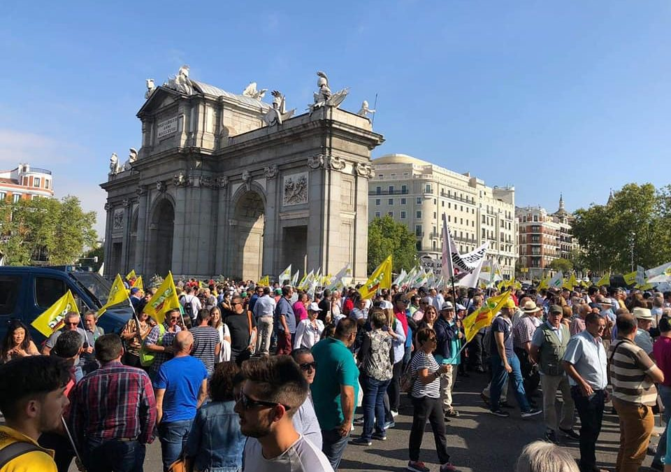 Andalucía por Sí critica «la falta de apoyo» del alcalde al sector olivarero