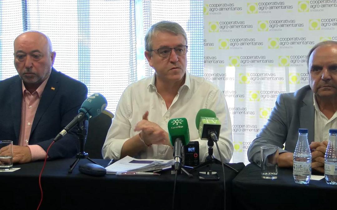 Los aranceles de Trump contra el aceite de oliva harían perder en Andalucía más de 252 millones de euros
