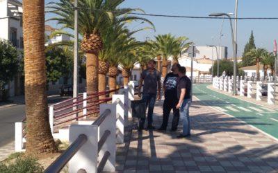 Medio Ambiente controla las plagas provocadas por el 'picudo rojo' en las palmeras