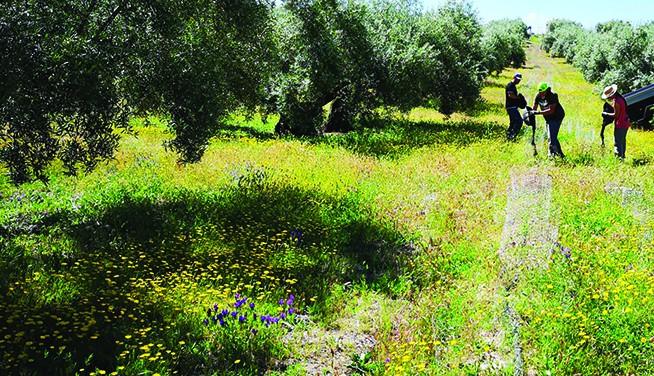 Combinación de cultivos de calidad que garantizan la biodiversidad
