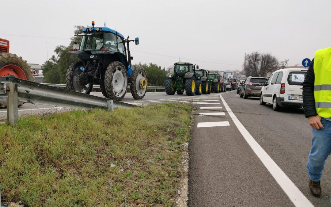 El olivar jiennense se enfrenta ante un posible recorte de las ayudas europeas del 9 por ciento
