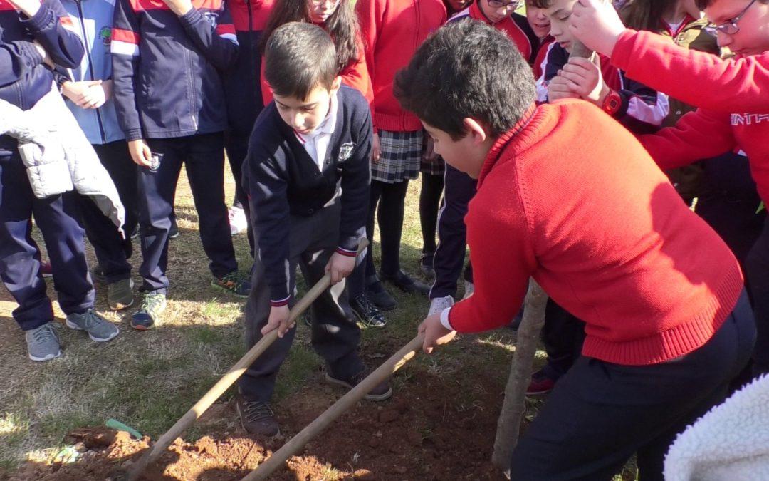 Once centros educativos de Andújar participan en la plantación de zonas verdes