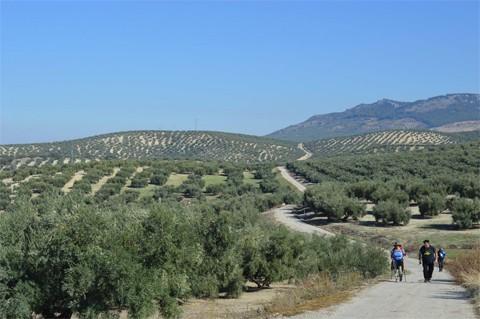 Desde Jamilena hasta Santiago por el Camino Mozárabe