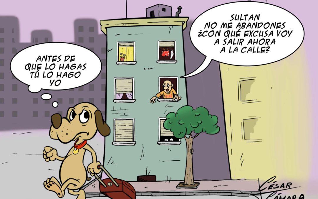 Cuarentena con tus mascotas en Torredonjimeno: paseos, limpieza, cuidados y abandono