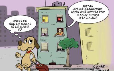 Cuarentena con tus mascotas en Torredelcampo: paseos, limpieza, cuidados y abandono