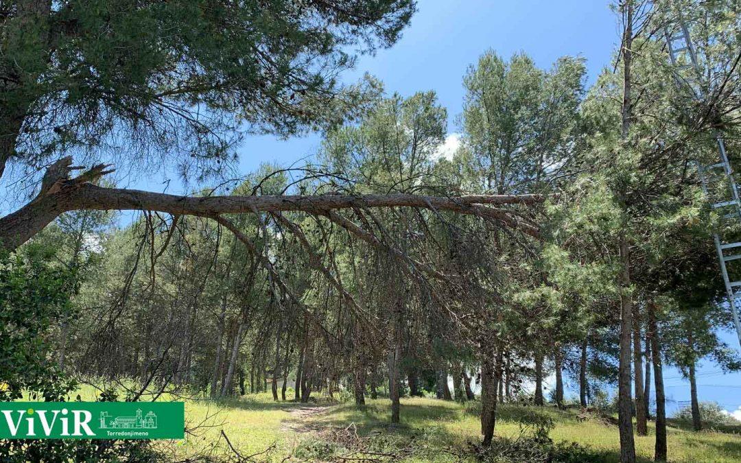 Restablecida la señal del repetidor de TV en Torredonjimeno cortada por la caída de una rama sobre el tendido eléctrico
