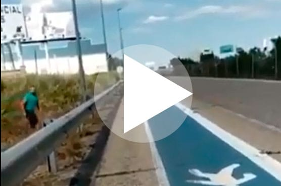 [Vídeo en el interior] A punto de causar un accidente: corzos espantados por un conductor saltan a la autovía A-4 en la provincia de Jaén