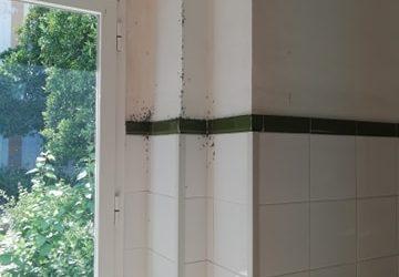 Usuarios denuncian una plaga de hormigas en el Hospital Viejo