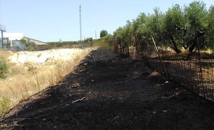 Los incendios de pastos se ceban con el polígono Mirabueno
