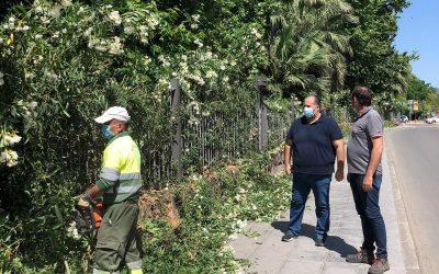 El Ayuntamiento lleva a cabo un estudio sobre el estado de los árboles en zonas infantiles