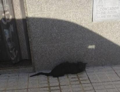 Denuncia por maltrato animal en Alcaudete