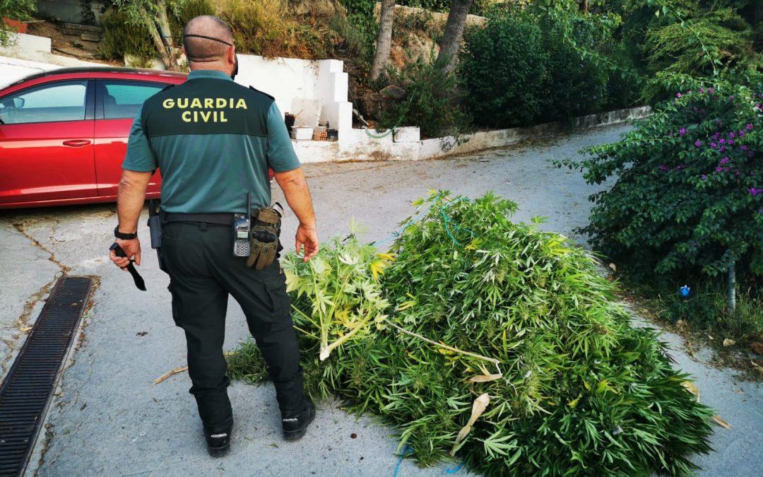 La Guardia Civil desarticula cuatro plantaciones de marihuana