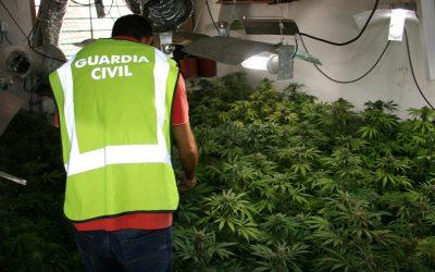 Detenido un hombre de 65 años por una plantación ilegal de marihuana en la Urbanización Valparaíso