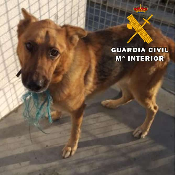 La Guardia Civil investiga a dos personas como presuntas autoras de un contra la protección de animales domésticos