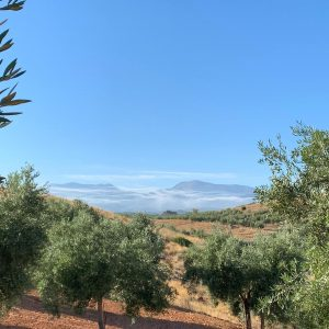 El Ministerio de Agricultura publica las normas para la autorregulación del sector del aceite de oliva