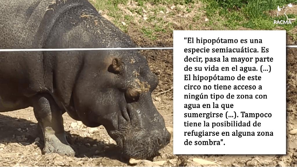 Pacma denuncia el estado de los animales del circo instalado en Arjona