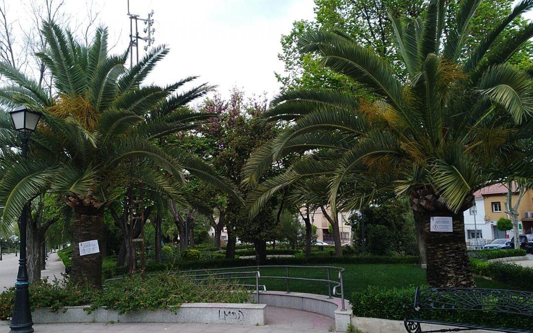 El Ayuntamiento insta al mantenimiento del buen estado fitosanitario de las palmeras