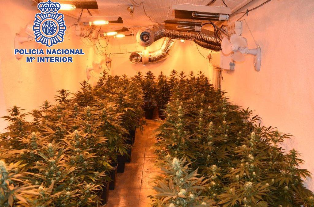 La Policía Nacional detiene en Jaén a una persona que gestionaba una plantación de marihuana