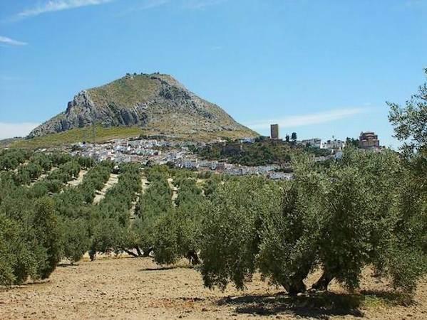 El aceite de oliva de la campiña mejora sus exportaciones